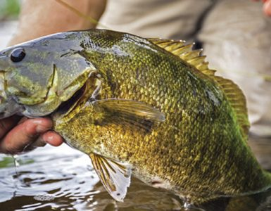 How To Use A Fish Finder To Catch Bass